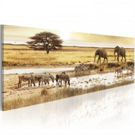 Kép Africa at the waterhole