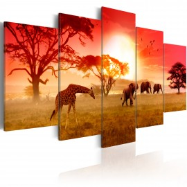 Kép Sunny colours of Africa